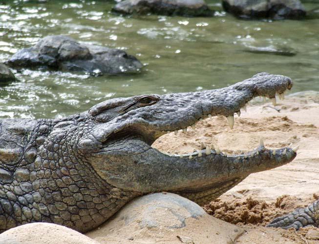 crocodile-park