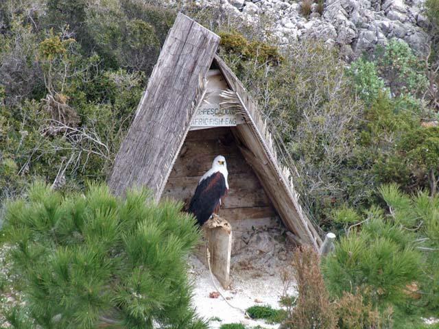 mount-calamorro-fish-eagle