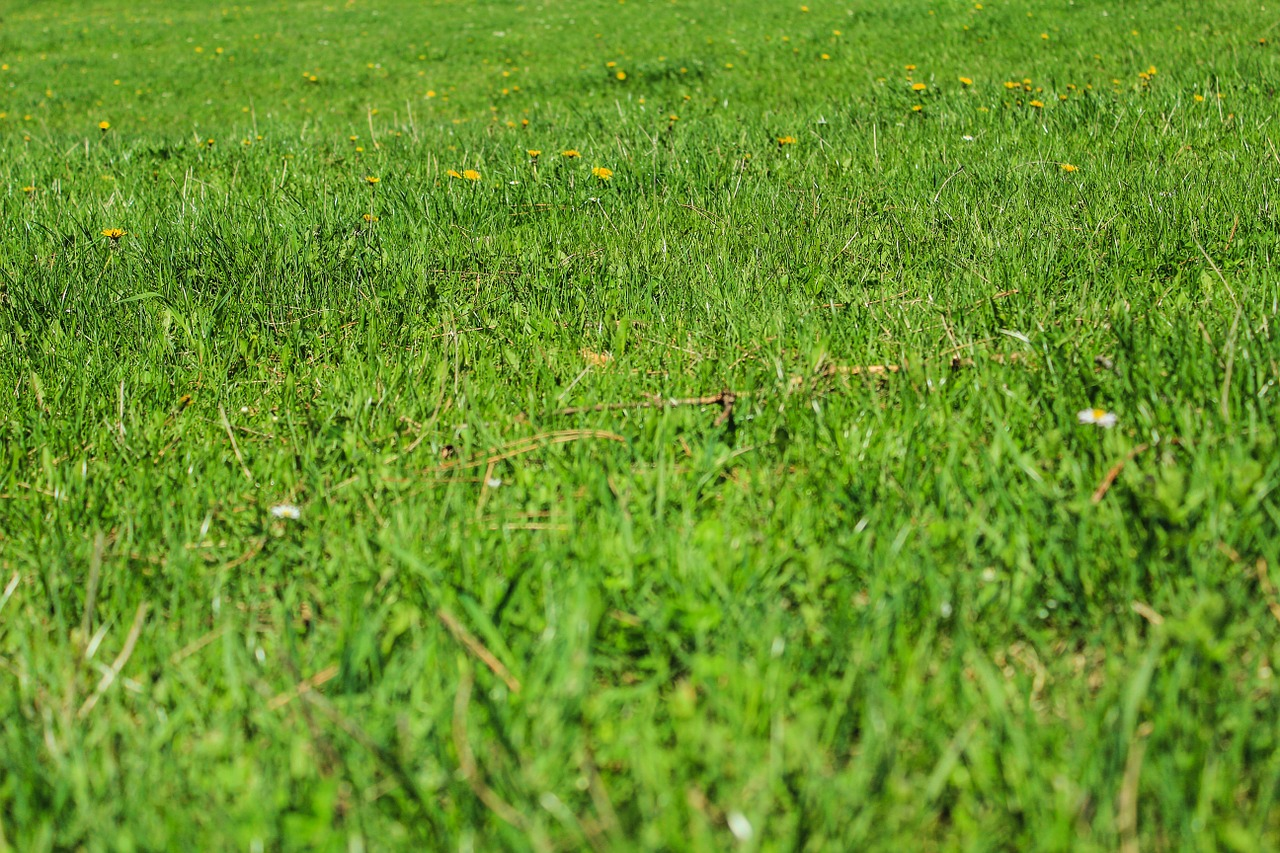 Improve Your Lawn with top dressing